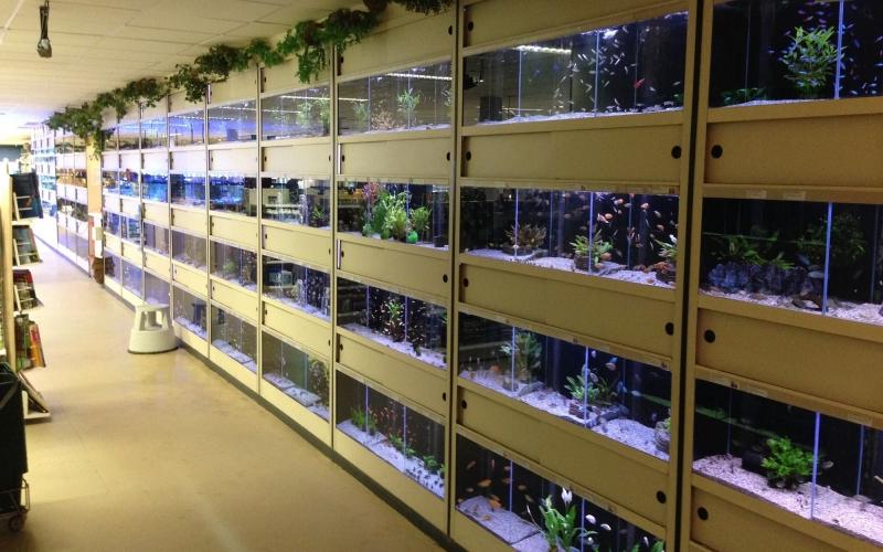 220_aquariumwand