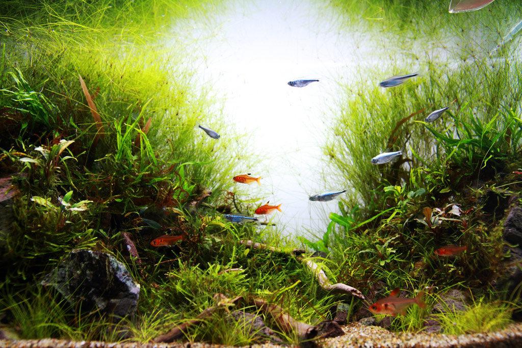 show aquarium