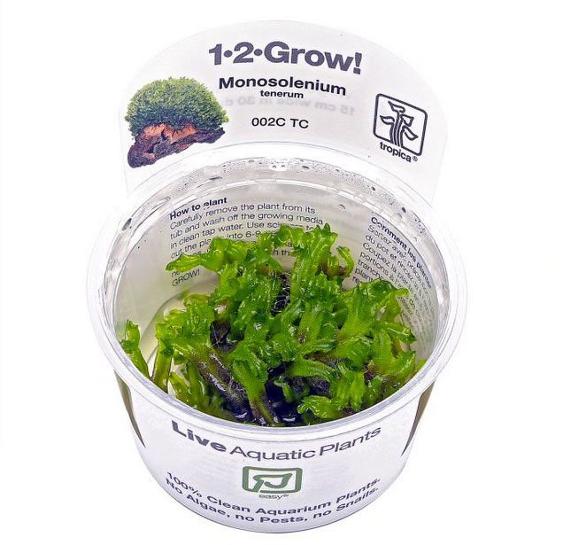 1-2-grow Monosolenium