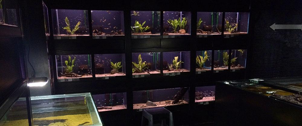 utaka-aquarium