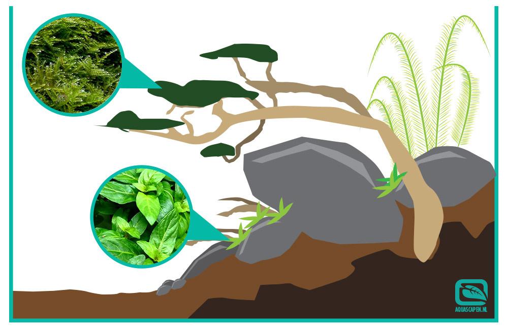 Lijm wat mos vast bijvoorbeeld Christmas moss en een middenplant zoals Staurogyne repens sp.