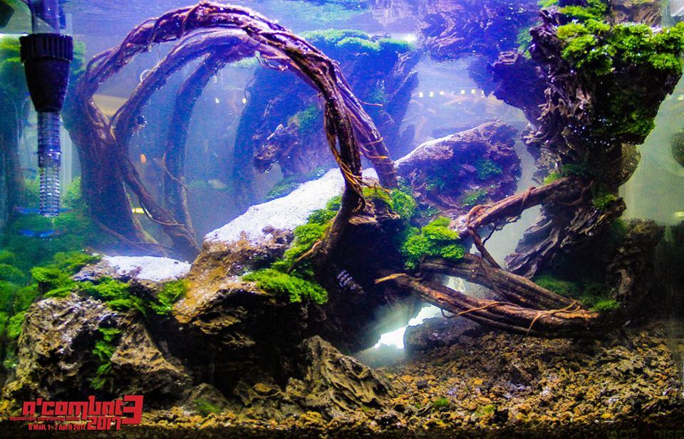 Inspiratie – A'Combat3 2017 - 60 cm aquaria