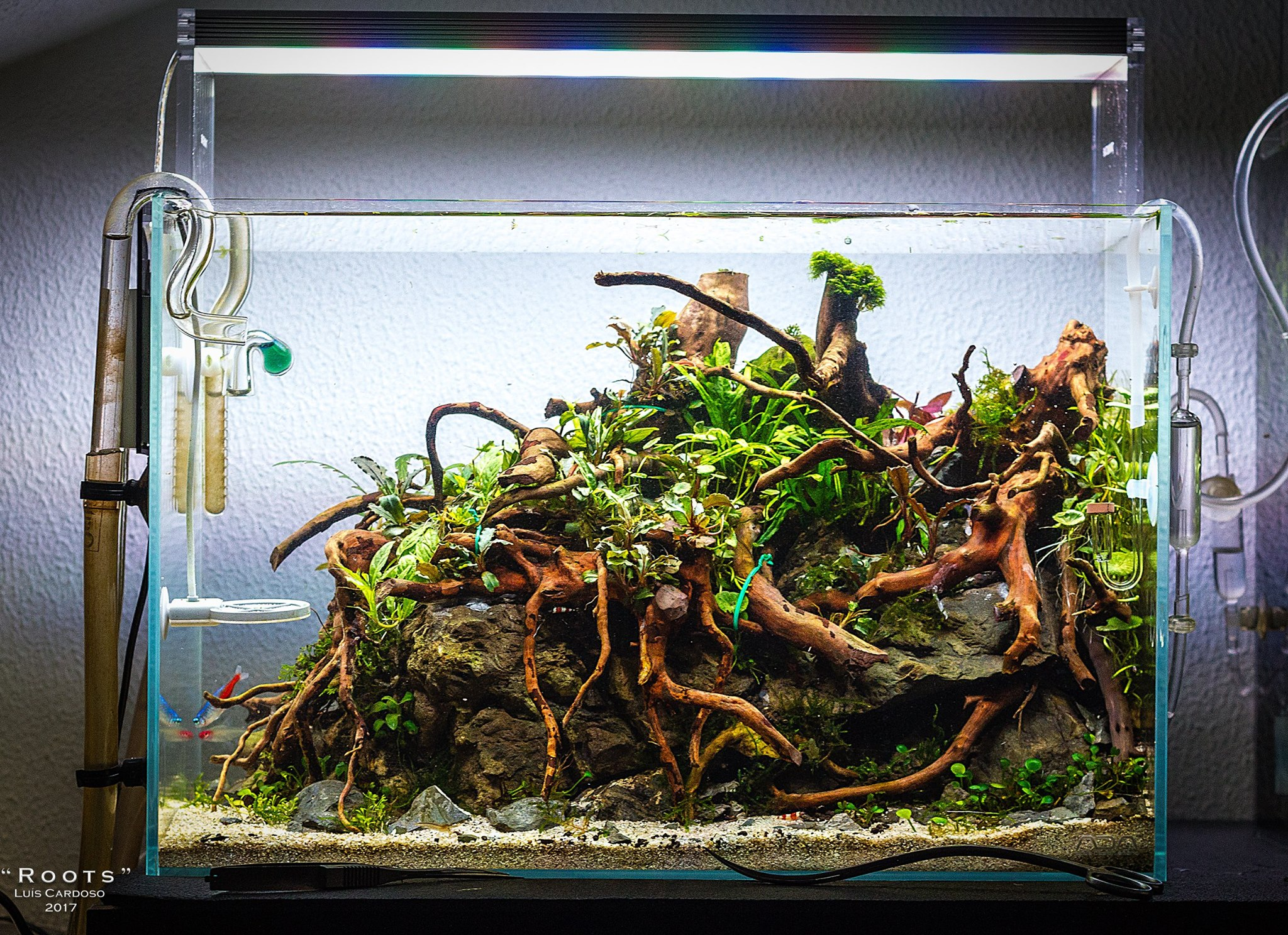 Roots - Luis Cardoso