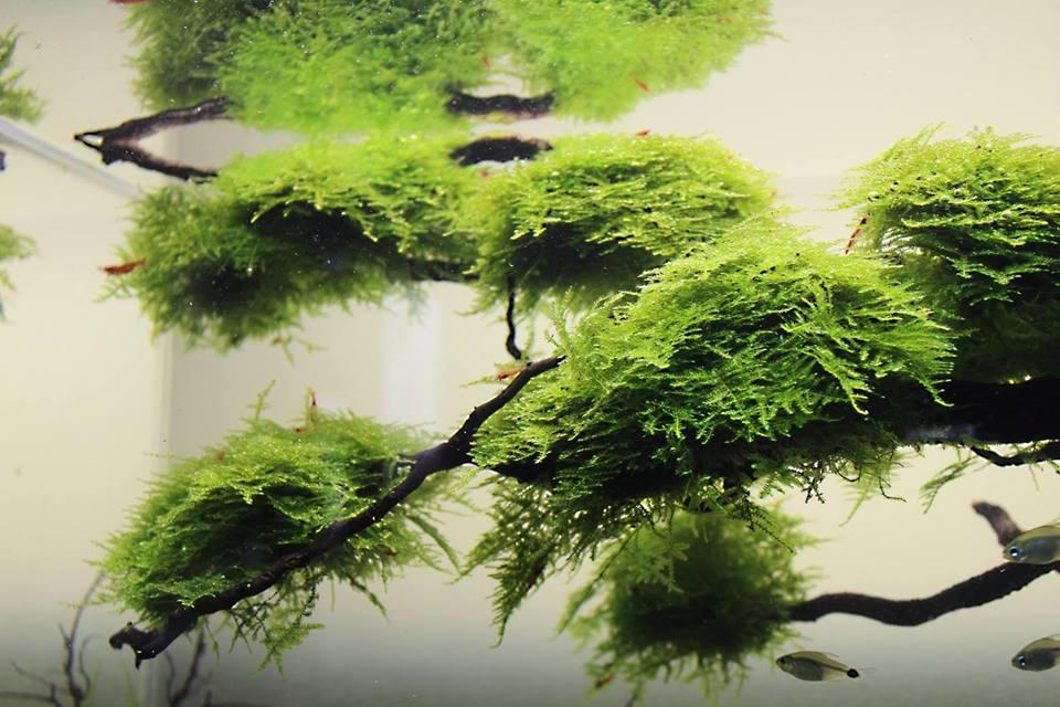 Treescape - Tereza Lazar